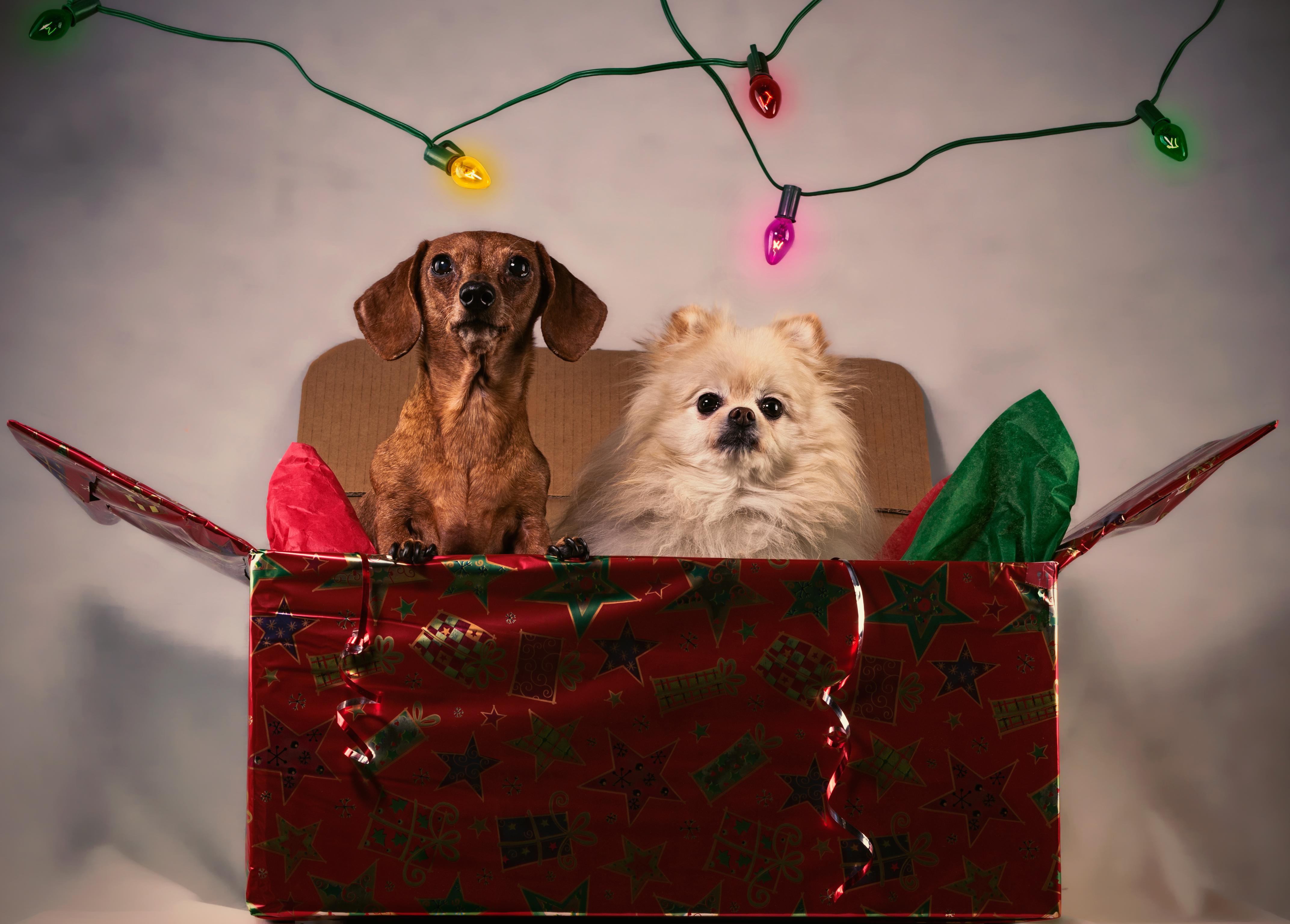 Pensione per cani offerta di Natale